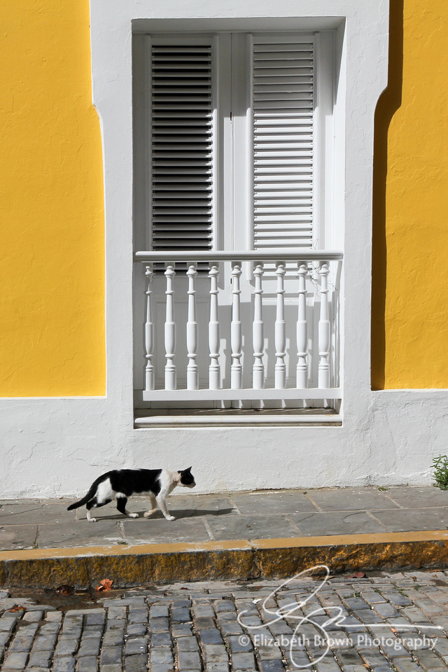 El Gato. Cat in Old San Juan, Puerto Rico.