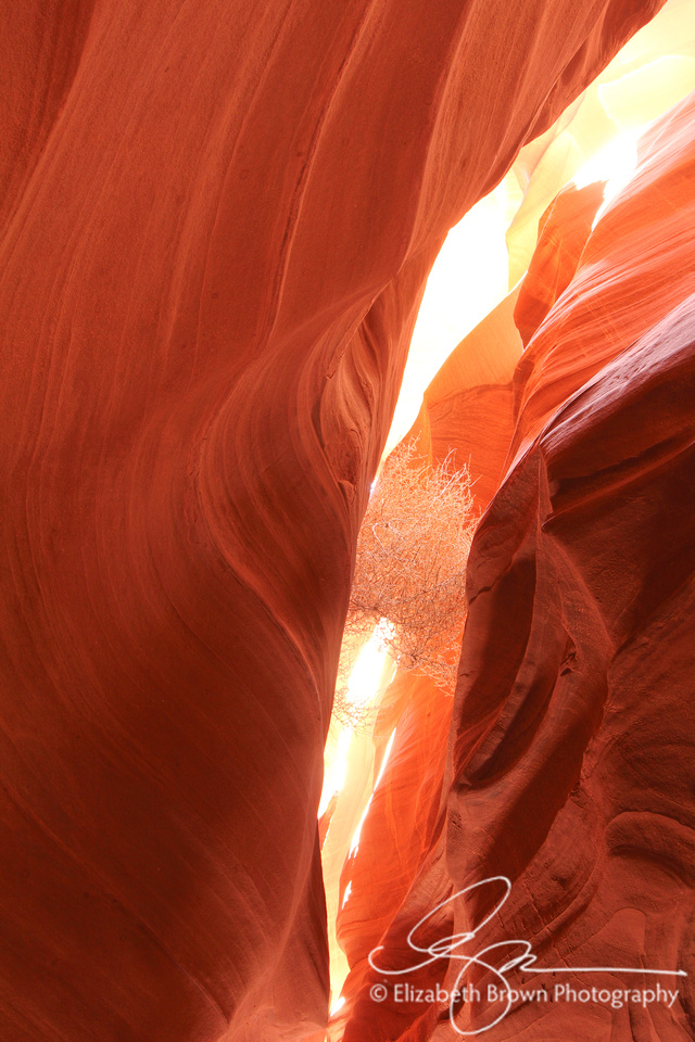 Upper Antelope Canyon Tumbleweed, Arizona