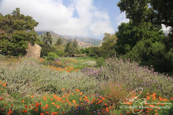 Santa Barbara Botanical Gardens, Santa Barbara, CA.